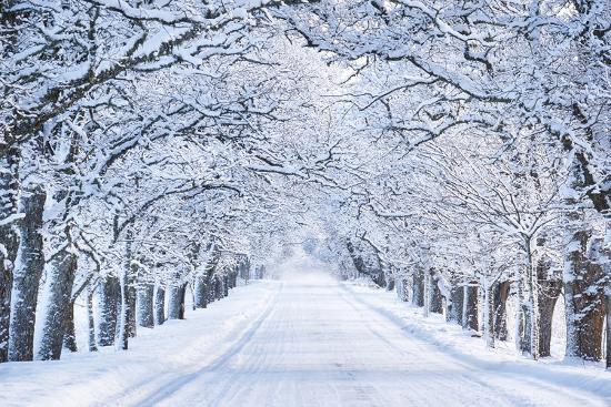 Alley in Snowy Morning-Anna Grigorjeva-Photographic Print