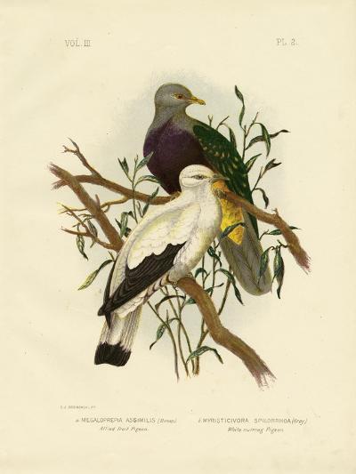 Allied Fruit Pigeon or Wompoo Fruit-Dove, 1891-Gracius Broinowski-Giclee Print
