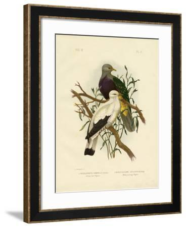 Allied Fruit Pigeon or Wompoo Fruit-Dove, 1891-Gracius Broinowski-Framed Giclee Print