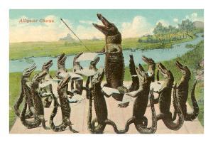 Alligator Chorus