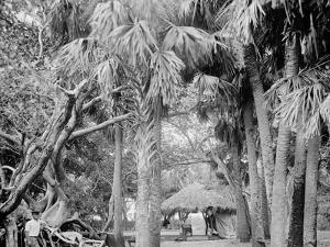 Alligator Joes Bungalow, Palm Beach, Fla.
