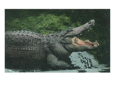 Alligator with Open Jaws--Giclee Print