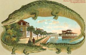 Alligators, Sea Wall, St. Augustine, Florida