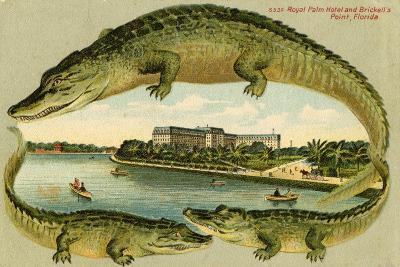 Alligators Surrounding the Royal Palm Hotel, C.1908--Giclee Print