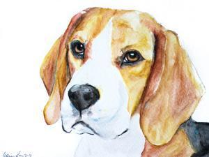 Beagle by Allison Gray
