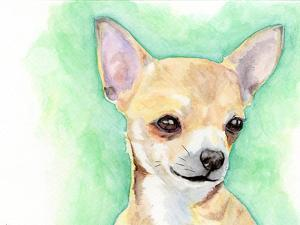 Chihuahua by Allison Gray
