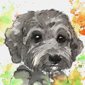 Citrus Splashes Poodle by Allison Gray