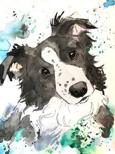 Curious Border Collie by Allison Gray