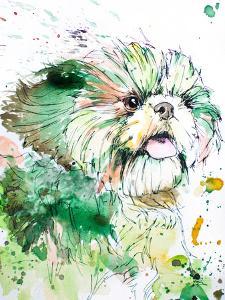 Green Shih Tzu by Allison Gray