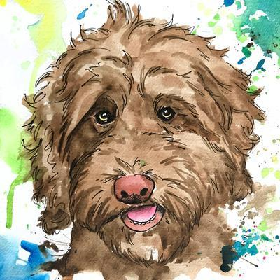 Olive the Labradoodle