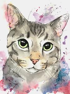 Patriot Grey Tabby Cat by Allison Gray