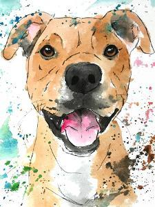Pibble Pit Bull by Allison Gray