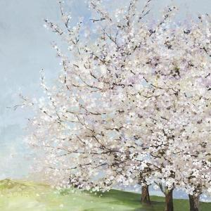 Blossom Orchard by Allison Pearce