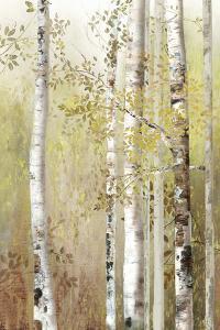 Serenity Birch by Allison Pearce