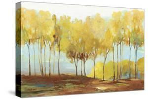 Yellow trees by Allison Pearce