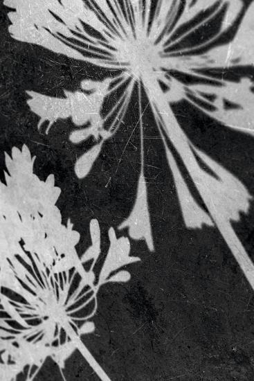 Allium Shadow-Ella Lancaster-Giclee Print