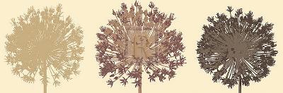 Allium Trio-Julie Lavender-Art Print