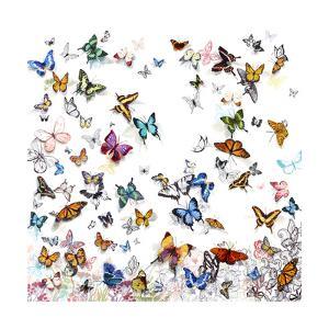 Papillon by Allyson Fukushima