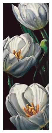Dewdrop Tulips