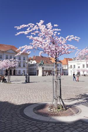 https://imgc.artprintimages.com/img/print/almond-blossom-in-the-market-place-landau-deutsche-weinstrasse-german-wine-road_u-l-psl9ky0.jpg?p=0