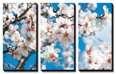 Almond Blossom-ArtesiaWells-Canvas Art Set