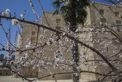 Almond Blossoms Bloom Outside of the Palace of the Shirvanshahs-Will Van Overbeek-Photographic Print