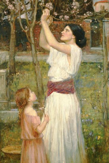 Almond Blossoms, C.1916-John William Waterhouse-Giclee Print