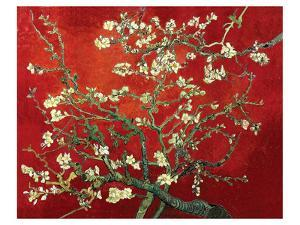 Almond Branches in Red