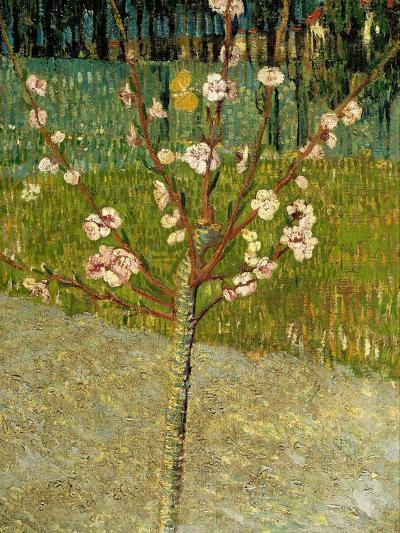 Almond Tree in Blossom, 1888-Vincent van Gogh-Giclee Print