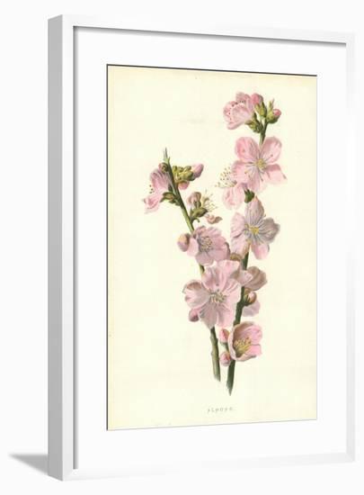 Almond-Frederick Edward Hulme-Framed Giclee Print
