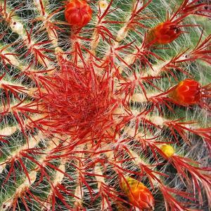 Cactus en Primer Plano by Almudena Marcos