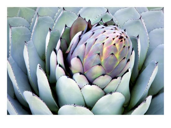 Aloe 2-PhotoDF-Premium Photographic Print