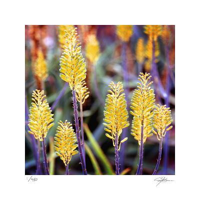 Aloe Buds-Ken Bremer-Limited Edition