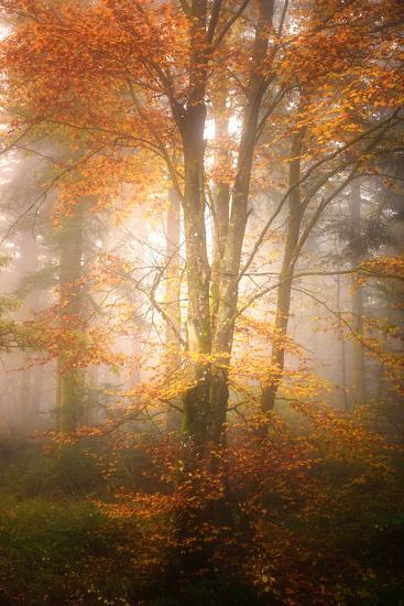 Alone in the Fog-Philippe Sainte-Laudy-Photographic Print