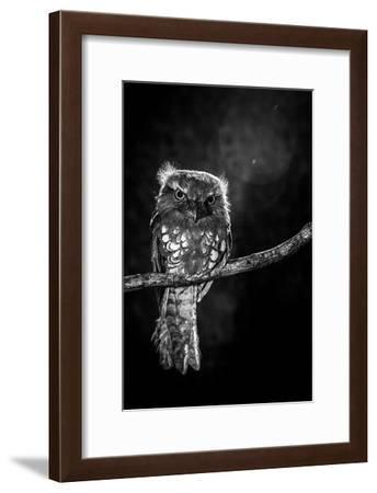 Alone in the night-Wilianto-Framed Art Print
