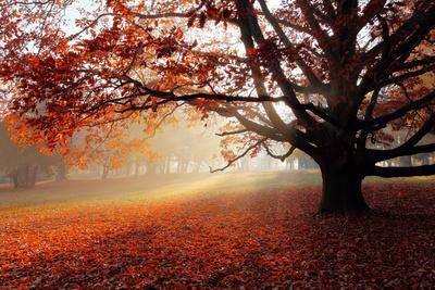 Alone Tree in Autumn Park-TTstudio-Photographic Print