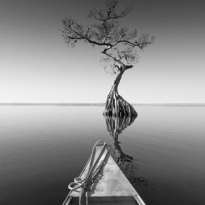 Alone with My Tree-Moises Levy-Photographic Print