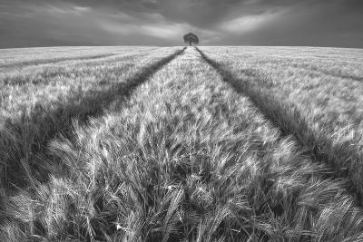 Alone-Piotr Krol (Bax)-Photographic Print