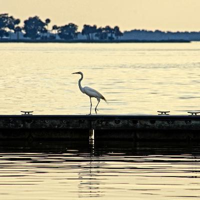 Along the Pier-Bruce Nawrocke-Photographic Print
