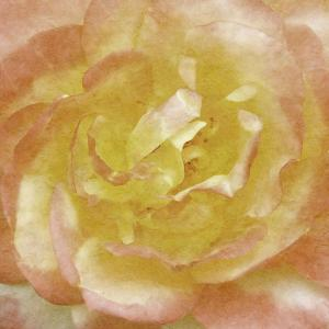 Wall Flower I by Alonzo Saunders