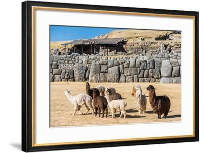 Alpacas at Sacsayhuaman, Incas Ruins in the Peruvian Andes at Cuzco Peru-OSTILL-Framed Photographic Print