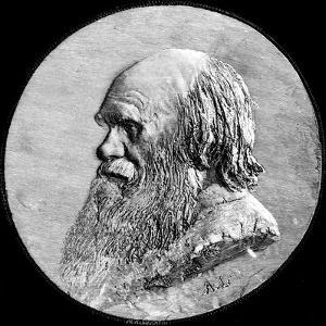 Charles Darwin, 1882 by Alphonse Legros