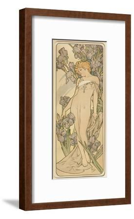 The Flowers: Iris, 1898