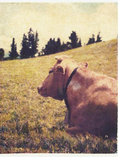 Alpine Cow No.2-Jennifer Kennard-Photographic Print