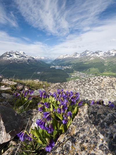 Alpine Flowers and Views of Celerina and St. Moritz from Atop Muottas Muragl, Switzerland-Michael DeFreitas-Photographic Print