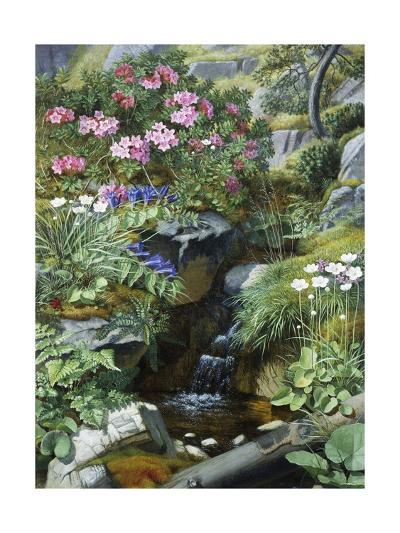 Alpine Flowers by a Stream-Otto Diderich Ottesen-Giclee Print