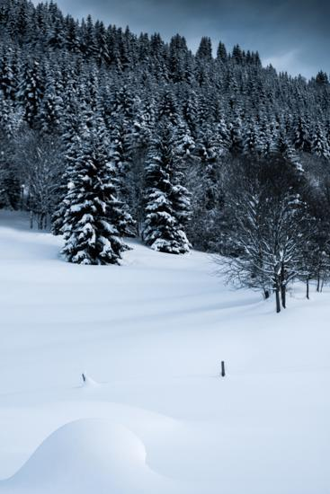 Alpine Flurry-Craig Howarth-Photographic Print