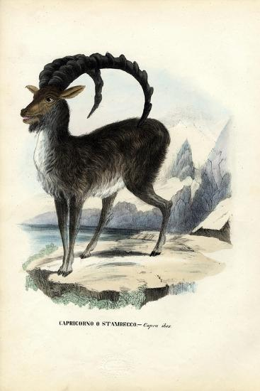 Alpine Ibex, 1863-79-Raimundo Petraroja-Giclee Print