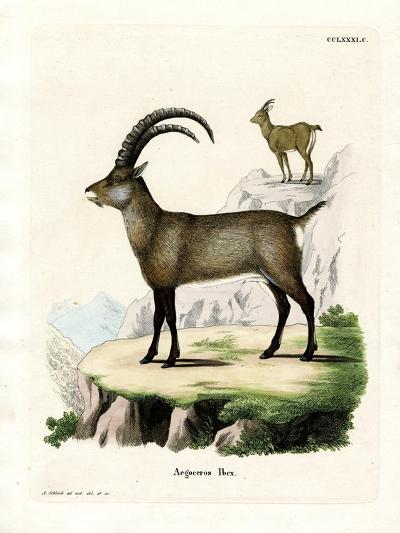 Alpine Ibex--Giclee Print