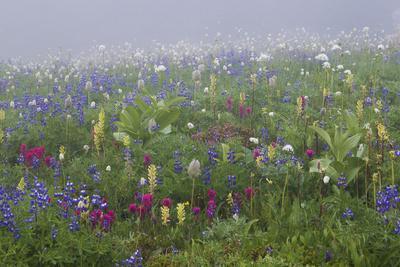 https://imgc.artprintimages.com/img/print/alpine-wildflower-mount-rainier-national-park_u-l-q1gbdda0.jpg?p=0